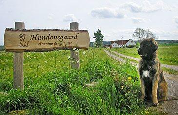 Arthur foran Hundensgaard